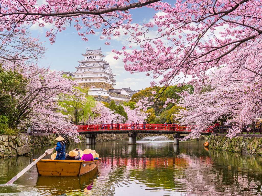Castello di Himeji in primavera